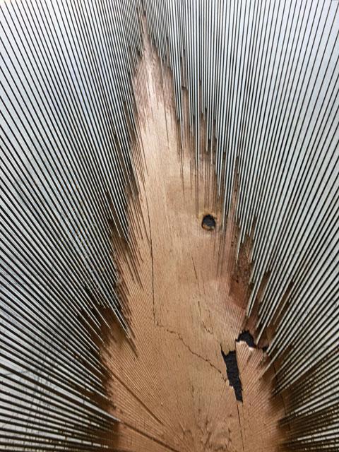 Dimensionen-5